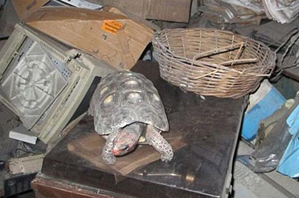 Manuela+the+Tortoise