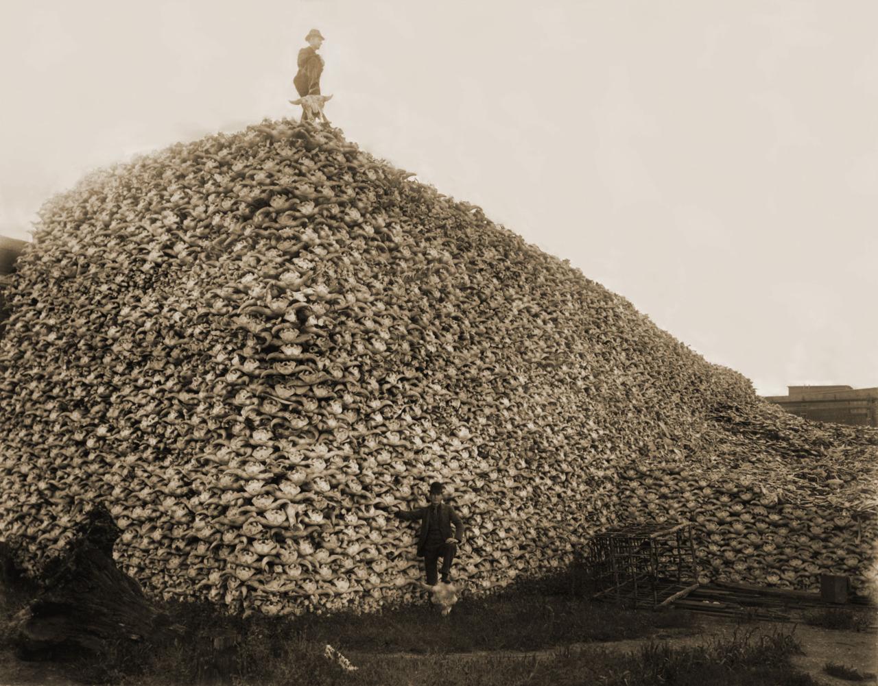 pile-of-bones-saskatchewan.jpg