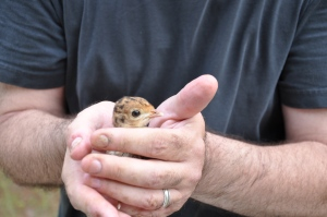Me, holding the captive poult.
