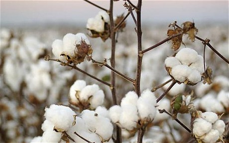 low micronaire cotton
