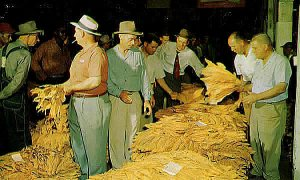 Photo of old-time tobacco auction, Ashe County, NC.