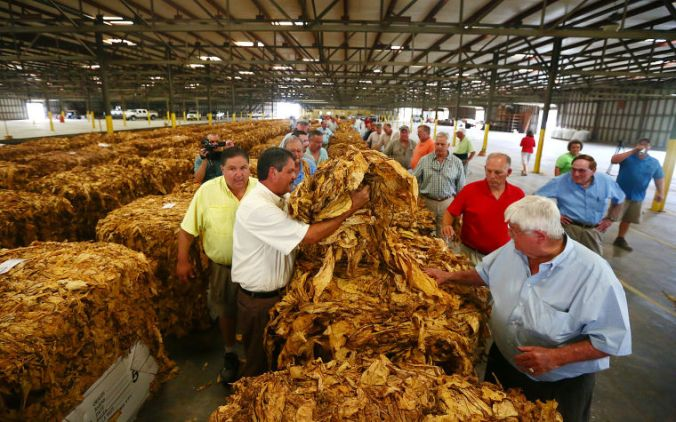 tobacco auction