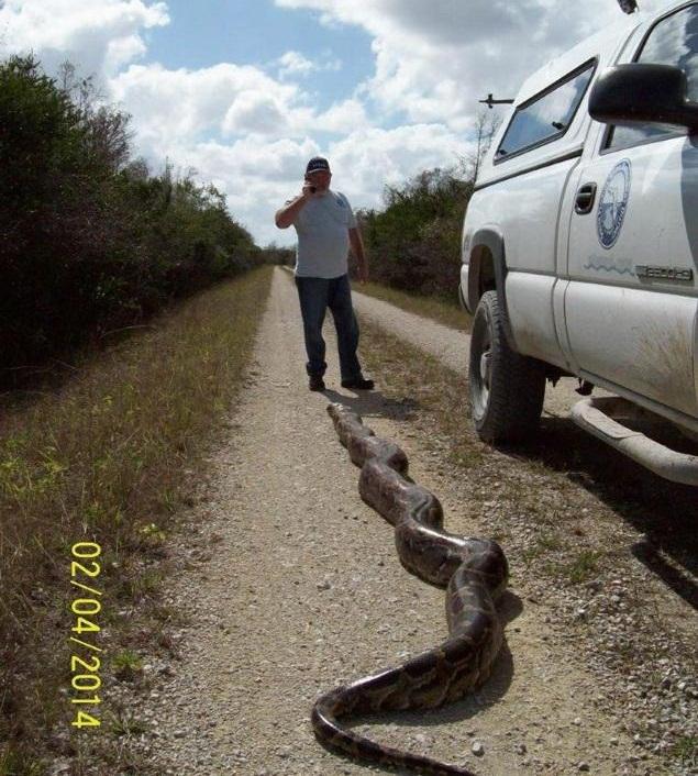 usa-florida-python