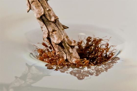 Ant-raft-stick