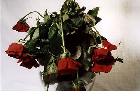 wilted_red_roses