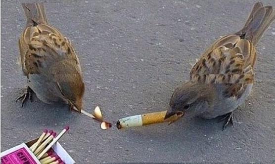 birds smoking