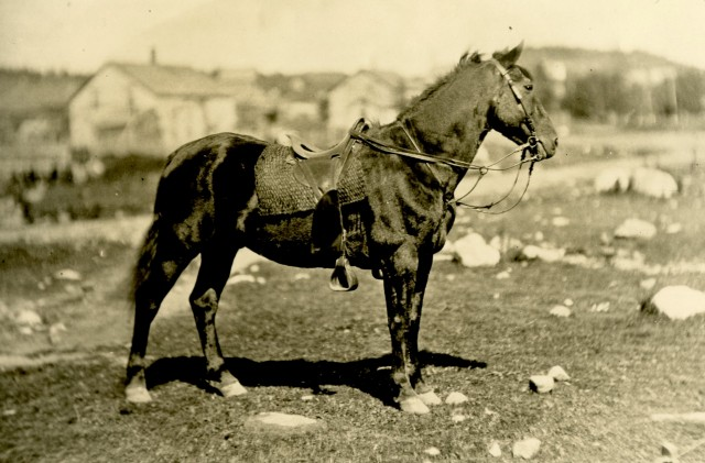 civil war horse