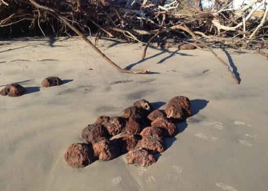 folly-beach-cannon-balls
