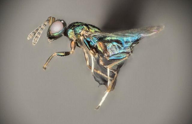 crypt-keeper-wasp