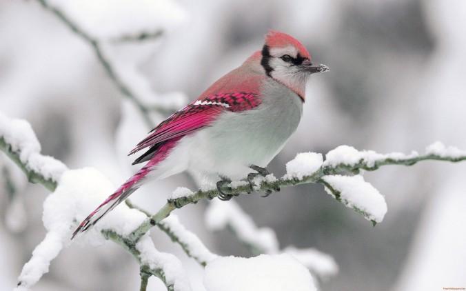 lone-bird